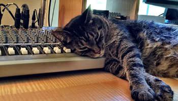 3-studio-kitty